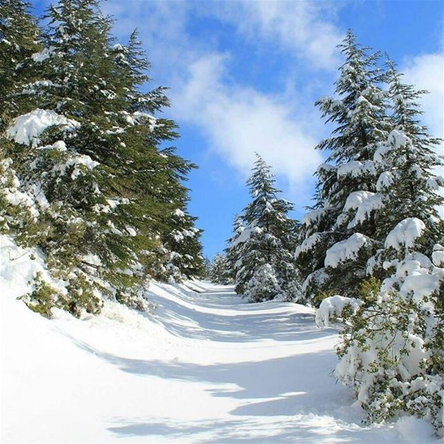 High way to heavenPhoto credits @ahmadelomar 👈👈👈😍😍😍 heaven cedar...