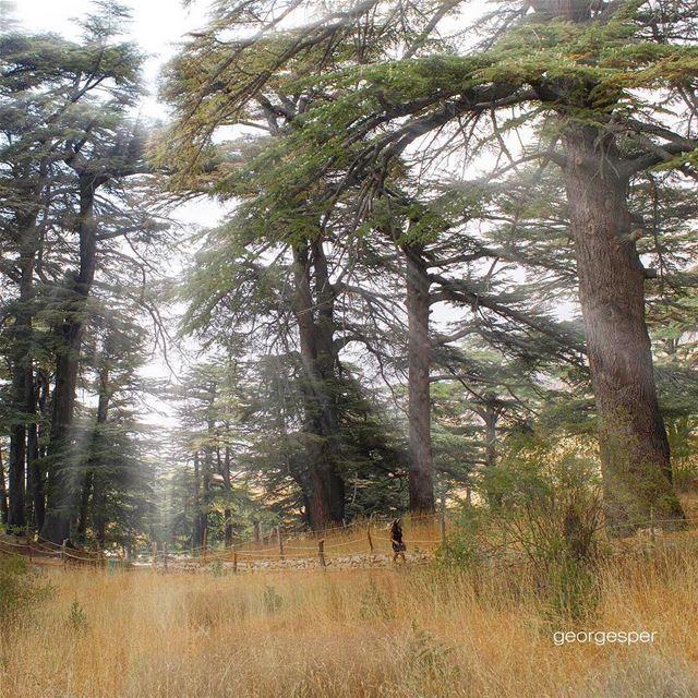 👉🏻facebook: @georgesper👈🏻.... proudlylebanese beautifullebanon ... (The Cedars of Lebanon)