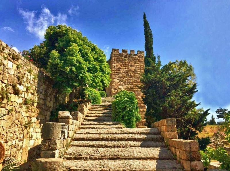 ☉ BybLoS lOvE 🌞 ..•••••••••••••••••••••••••••••• Lebanon trees ... (Byblos, Lebanon)