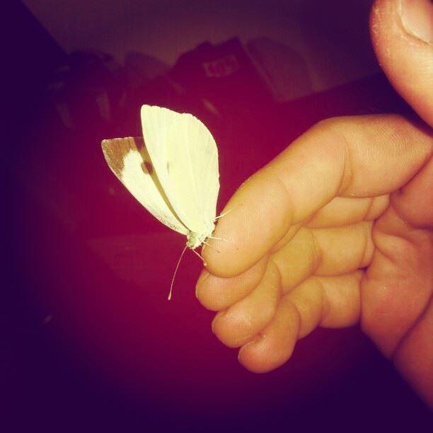 butterfly hand lebanon ...