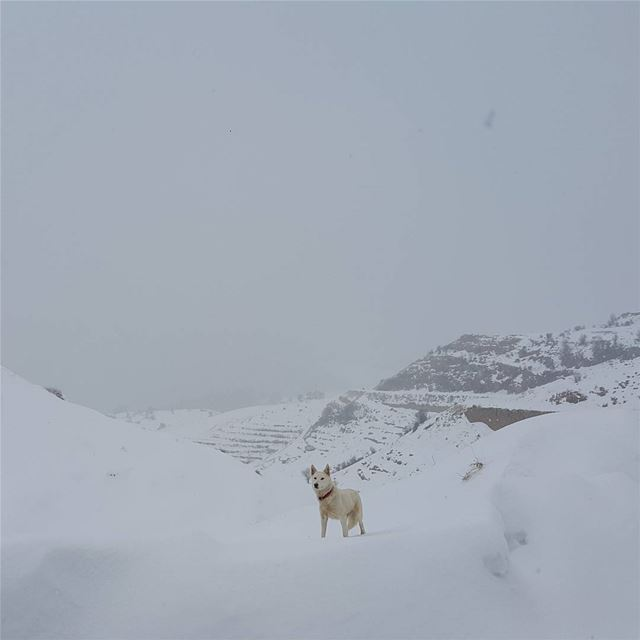 The guardian of the mountain dog lebanon naturelovers snow wild ...