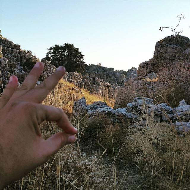 👌👌👌 naturelovers gowild forest hikingtrails trailslife hiking ...