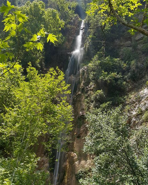 Heaven janne  lebanon  naturelovers  gowild  forest  waterfall  river ...