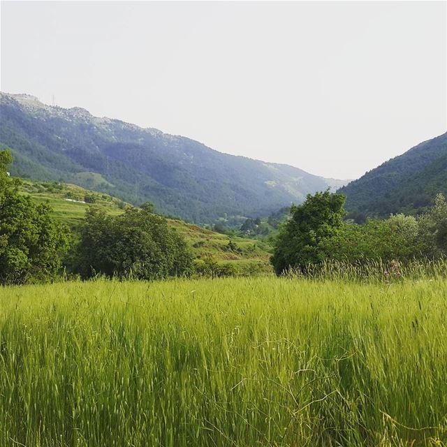 Oudin valley naturelovers livelovelebanon liveloveakkar lebanon_hdr ...