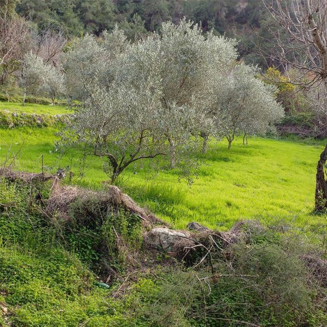 On our way to the river, we saw this clearing with a scattering of olive... (Debiye)