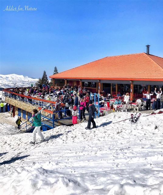 skiing teleski cedars lebanon mountains snow sunnyday nature ... (Cedars Ski Slopes)