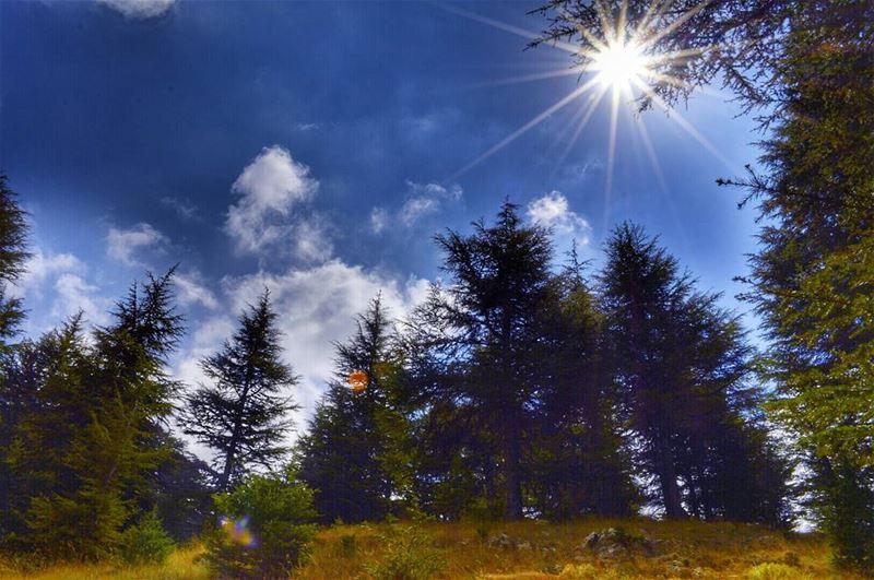 cedarlebanon lebanon lovelebanon love lovelebanon whatsuplebanon ... (Cedars Mountains)