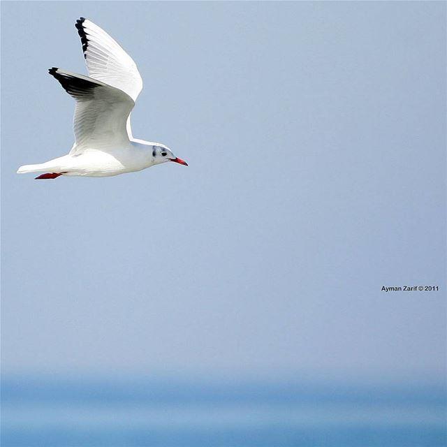 canon1ds2 photography color composition colors birds lebanon ...