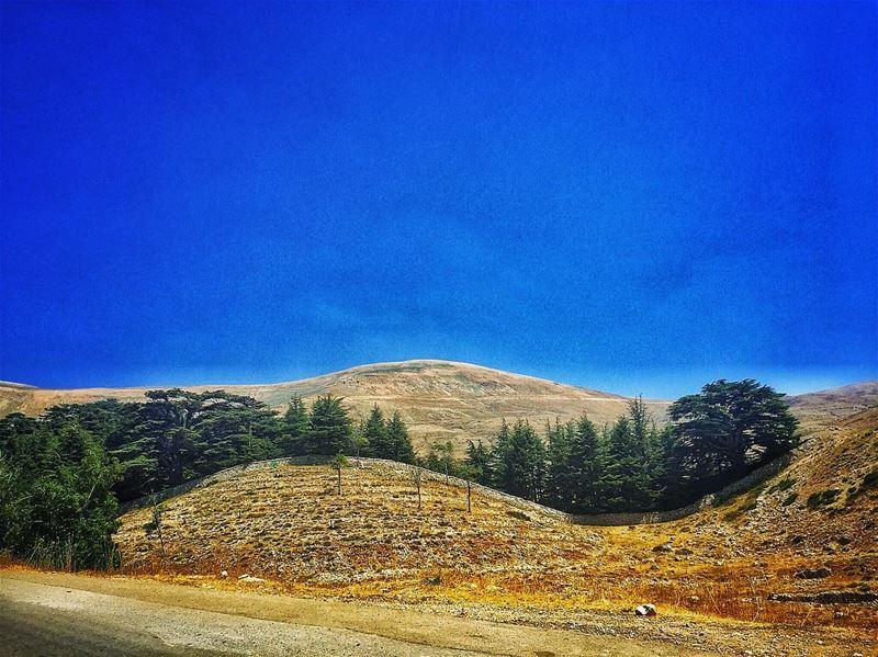 Ying Yang Cedars ☯️ livelovelebanon ... (Cedars Of Lebanon)