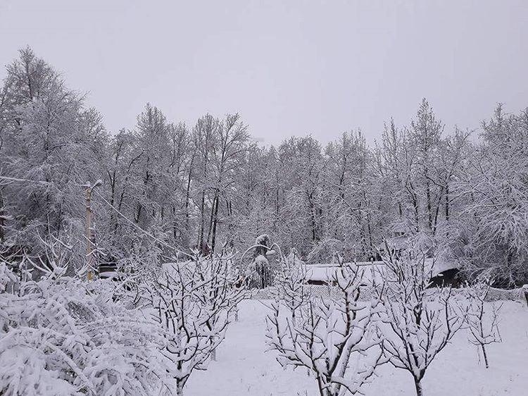 Faraya this MorningGroupe Z are you ready for skiing on the fresh snow ? ... (Faraya, Mont-Liban, Lebanon)