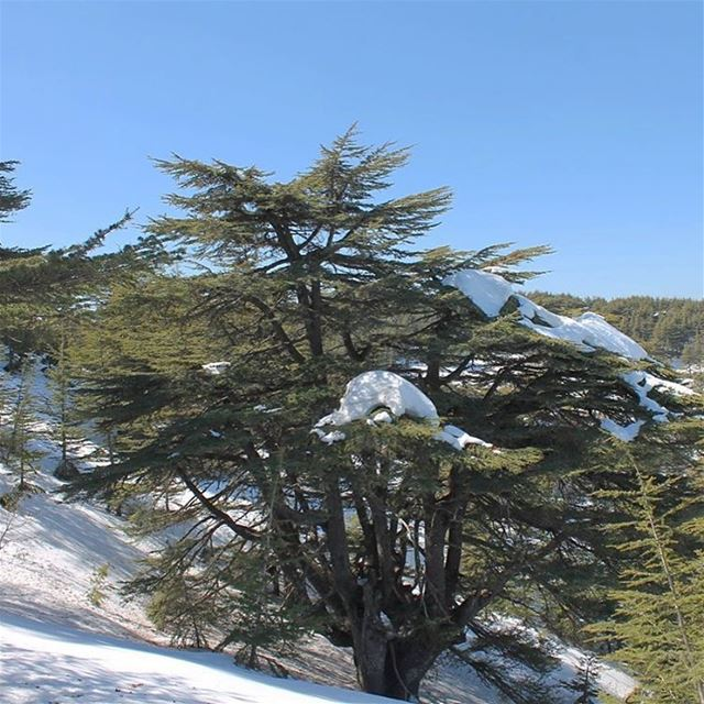 Learn character from the trees, values from the roots and change from the... (Al Shouf Cedar Nature Reserve)