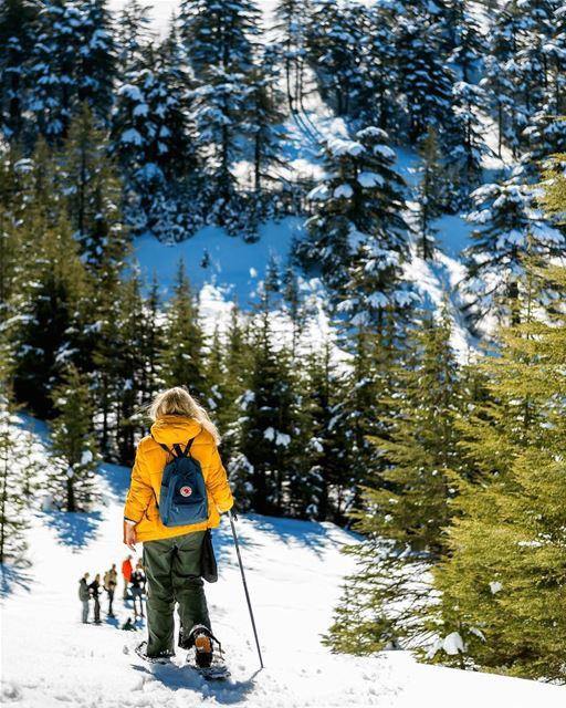 A Swedish discovering the lebanese mountains ❄️ lebanon barouk swedish ... (Shouf Biosphere Reserve)