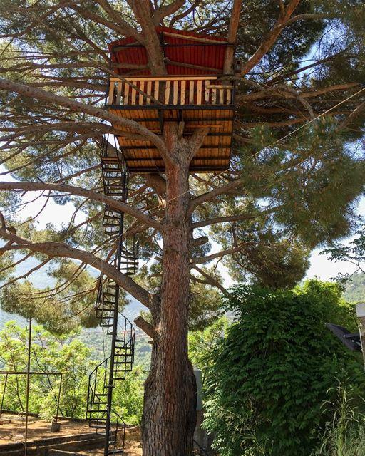 Who wants to live in this Tree house? 😀🍄.. whatsuplebanon instagram... (Jouret Bedran)