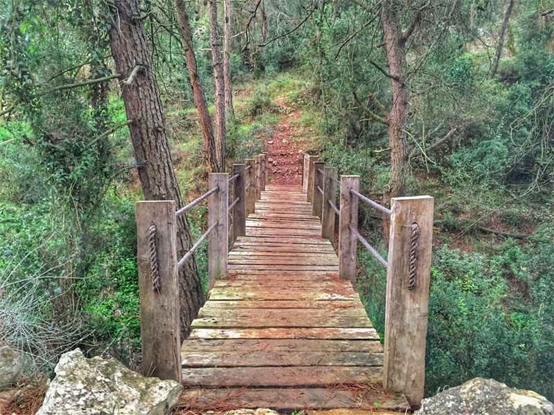 Until you cross the bridge of your insecurities, You can't begin to... (Cornet Chehwan , Montana)