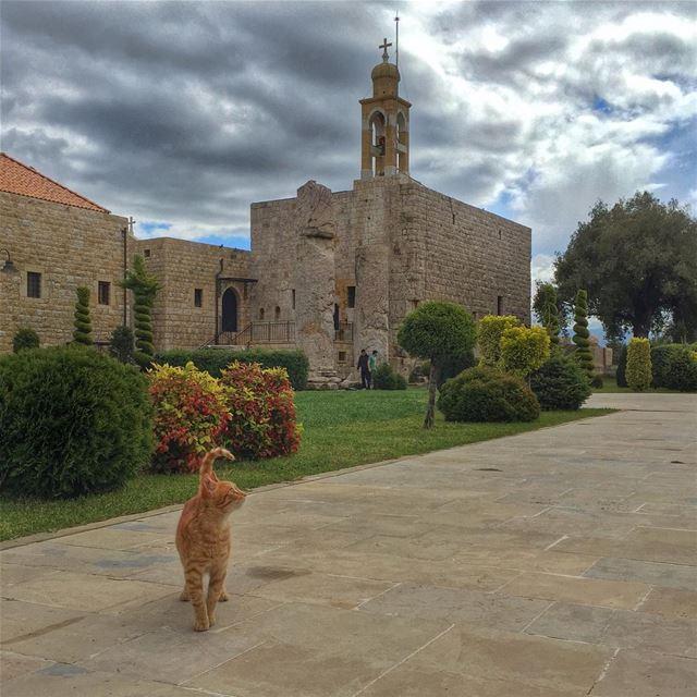 Holy Cat 🐈 catsofinstagram cat livelovepets lebanon lebanon_hdr ... (Deir El Kalaa-Beit Meri)