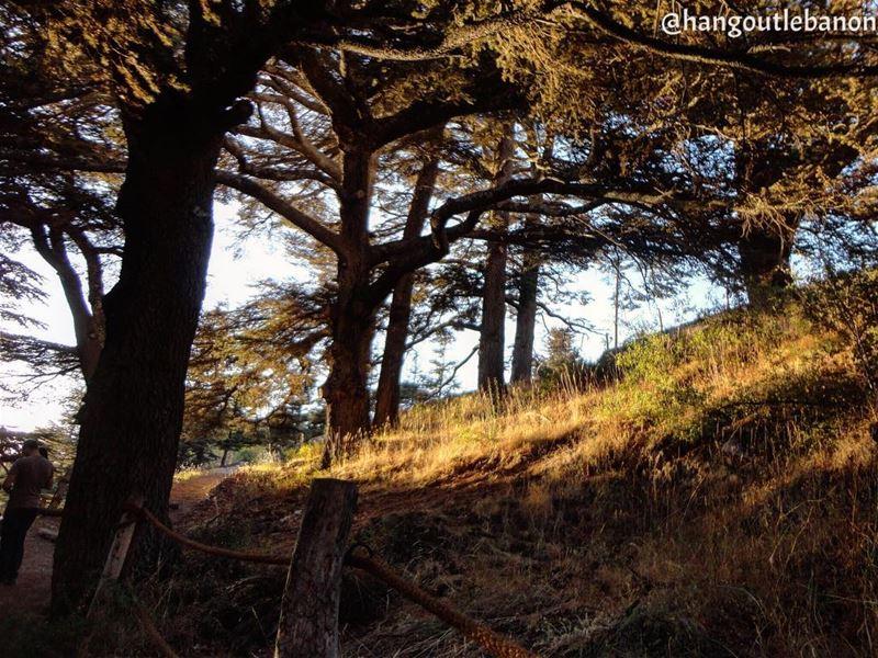 It's Friday, plan your weekend well. ما تنسى تتأمل الطبيعة والجوّ الساحر (Cedars of God)