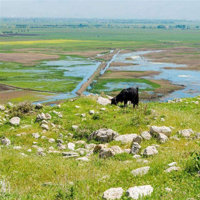 ammiq waterland ---------------------- hangoutlebanon ... (`Ammiq, Béqaa, Lebanon)