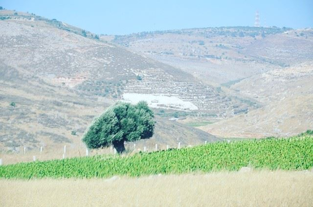 Roads and  tobacco fields, twins of  southlebanon.--------------------... (Mais El Jabal)