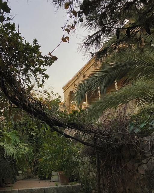 Wild (Zouk Mosbeh)