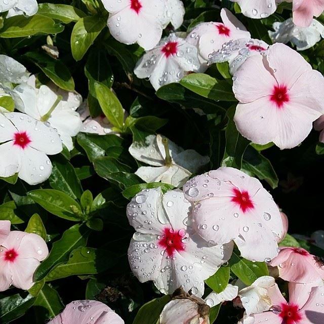 nofilter nature flowers green white pink red Beirut Abudhabi ...