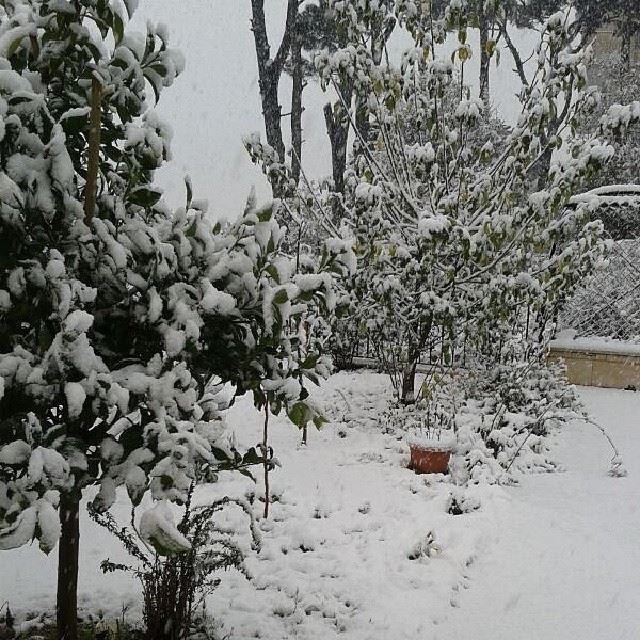 nofilter december 2013 lebanon Bzebdine snow pine tree ...
