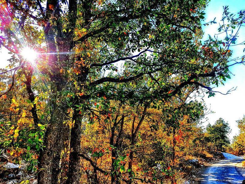 autumn🍁 autumn yellowing tarchich sannine mountain mountains ... (Tarchich)