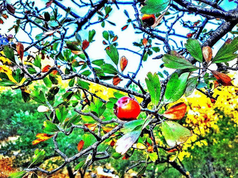 autumn🍁 autumn ...