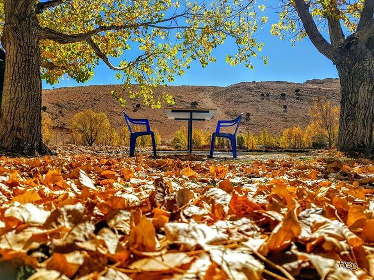 autumn autumn🍁 yellowing molt migration seating free silent ...