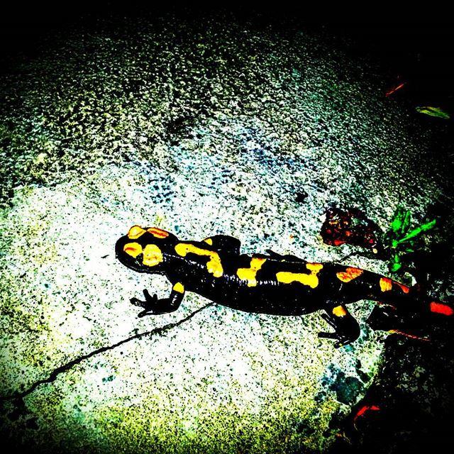 iguana iguanas lebanoninstagram insta_lebanon ptk_lebanon douma ... (Douma, Liban-Nord, Lebanon)