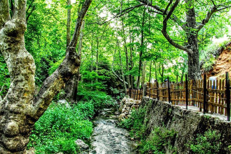tannourinepicnicpark picnic picnicday tannourine lebanon ... (Tannourine)