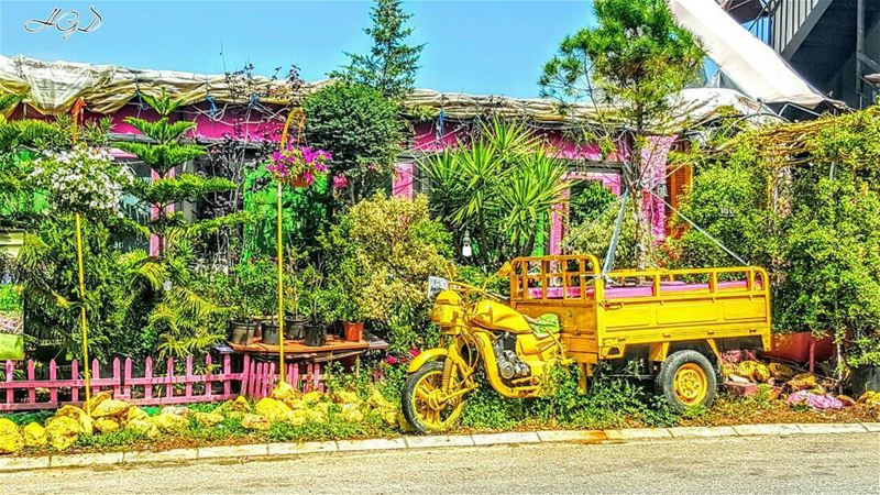 color colors flower flowers zouk zoukmikael antoura jounieh ... (Zouk Michael /Antoura)