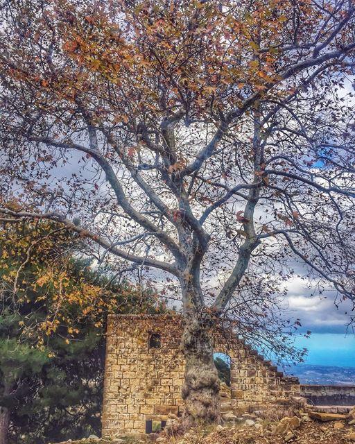 أعماق الينابيع وجذور الأشجار وحجارة الأساس لا تُرى بالعين - الأب الدكتور يو (Ehden, Lebanon)