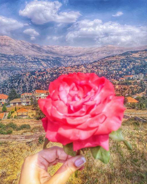 🌹🗻 Rose of the mountain 🗻🌹________________________________________... (Hasroun)