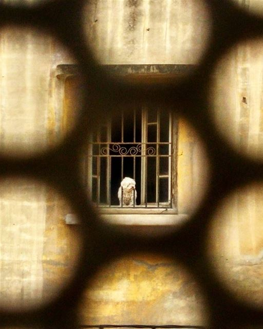 Hey buddy, I feel with you! locked prisoner breakfree beirut city ...