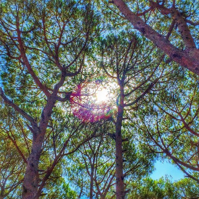 sun branches maze nature naturelovers naturecolors green trees ... (Jezzîne, Al Janub, Lebanon)