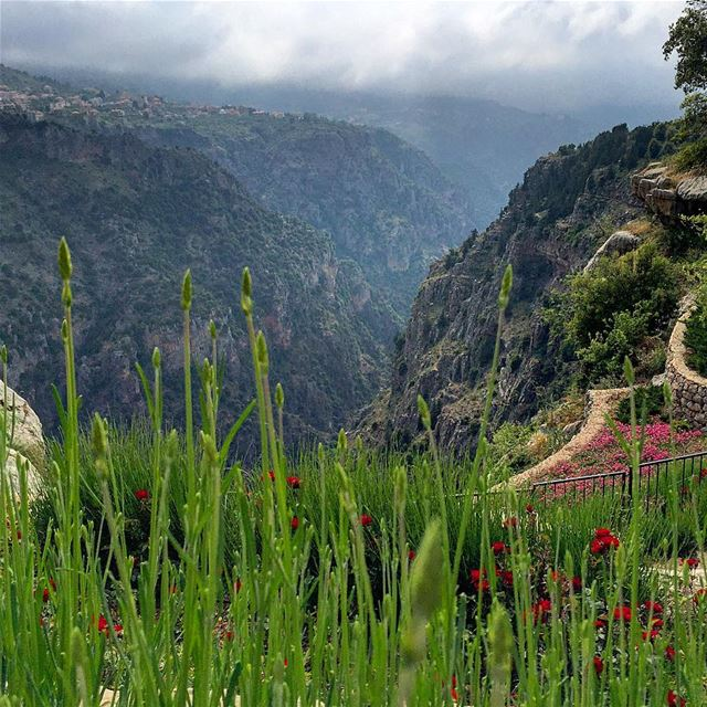 sunday getaway panoramic view landscape valley trees nature blue ... (Bsharri, Lebanon)