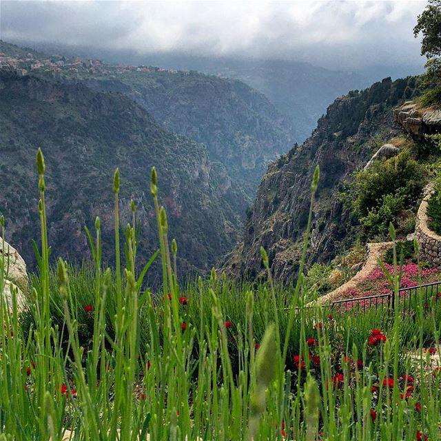 sunday getaway panoramic view landscape valley trees nature blue ... (Bsharri, Lebanon)