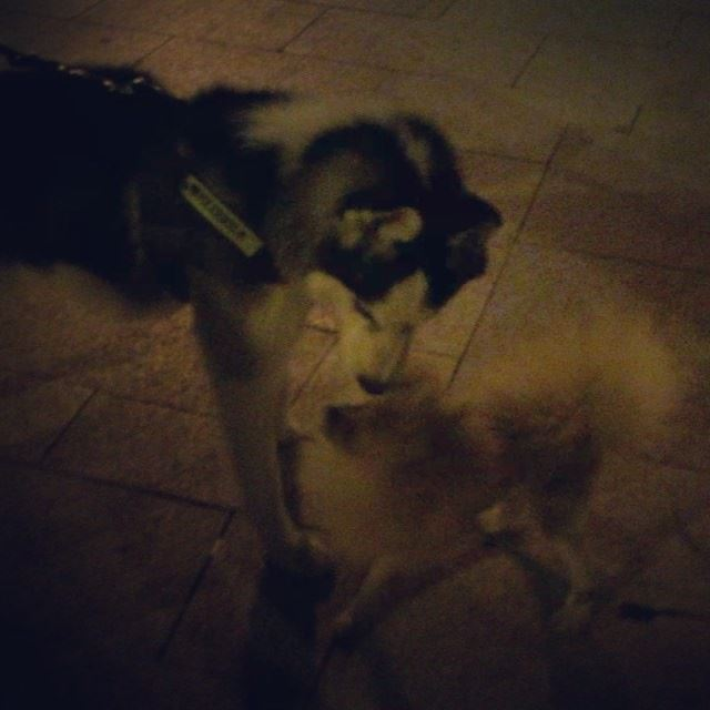 animal love dog husky animallovers animalsofinstagram walk igers ... (Beirut, Lebanon)
