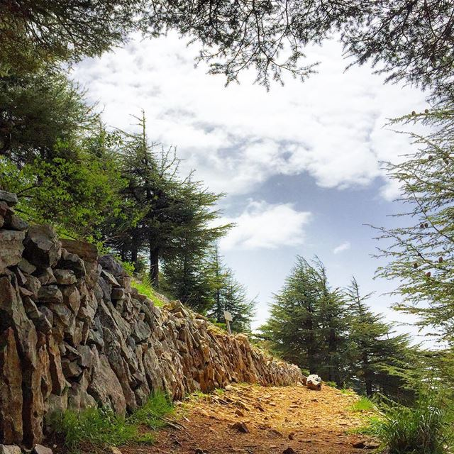hiking nature naturelovers naturecolors cedar trees WhatsUpLebanon... (Barouk Cedar Forest)