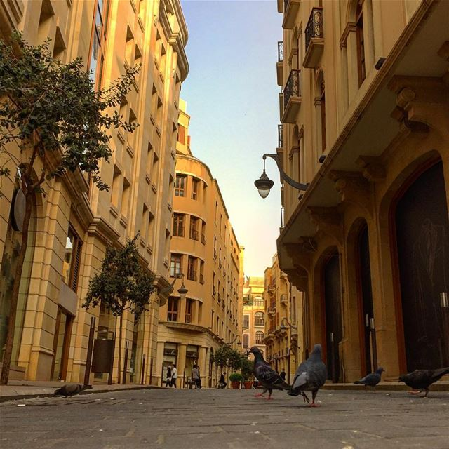downtown pigeons street architecturelovers architecture archilovers ... (Downtown, Beirut, Lebanon)