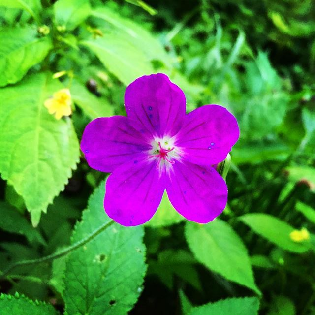 purple flower green plants nature naturecolors flowerstagram igers... (Beirut, Lebanon)