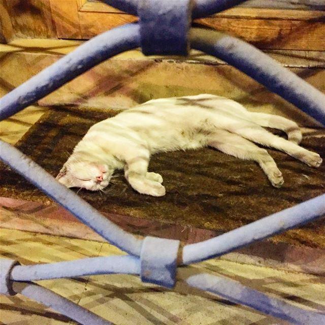 wise cat sleeping peacefully behind bars deep sleep animal ... (Bliss Street)