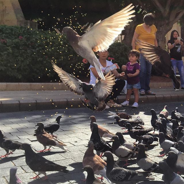 special day pigeons having lunch flying birds animals eating ... (Downtown, Beirut, Lebanon)
