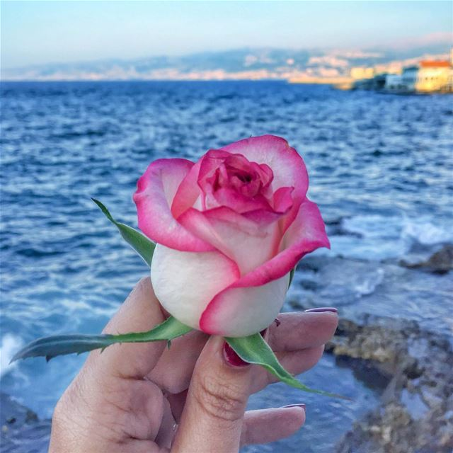 You can complain because roses have thorns, or you can rejoice because... (Beirut, Lebanon)