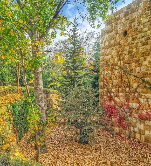 Every leaf is a falling tear Golden like the memories of the days you... (Ehden, Lebanon)