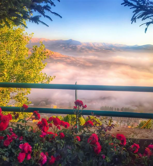 sunset roses 🌹🌅🙏_______________________________________ ehden ... (Saydet El Hosn - Ehden)