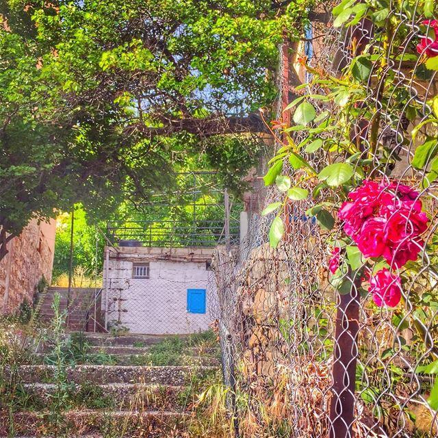 Le bonheur est souvent la seule chose qu'on puisse donner sans l'avoir et... (Ehden, Lebanon)