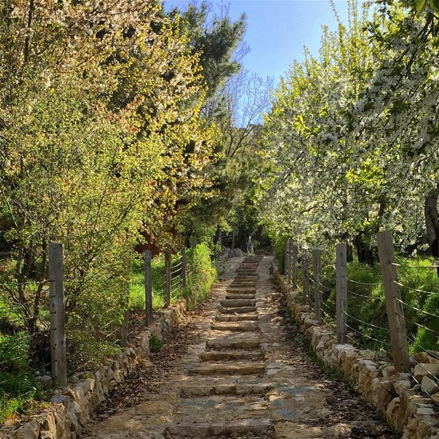 There are Roads that lead you nowhere 🎶 and Roads that lead you Home 💚... (La Reserve Horsh Ehden)