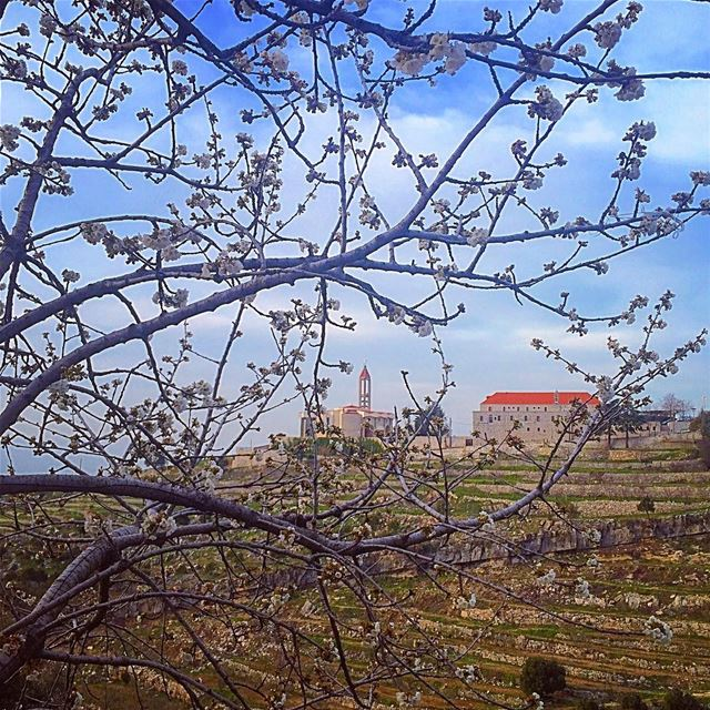 May your every sunrise be as beautiful as spring and carry the blossoms of... (Annaya - Saint Charbel.)
