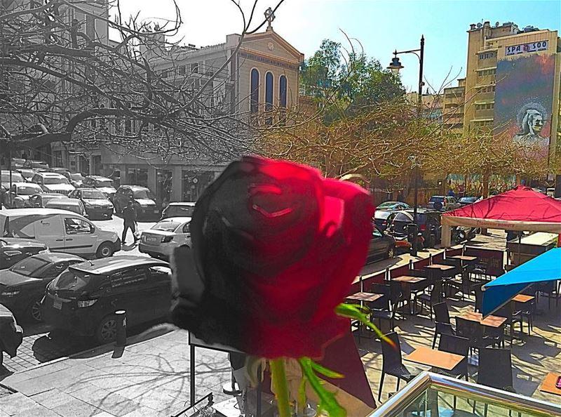 Happy International Woman's day 🌹 نص_الدني 🌹... (Hamra - حمراء)